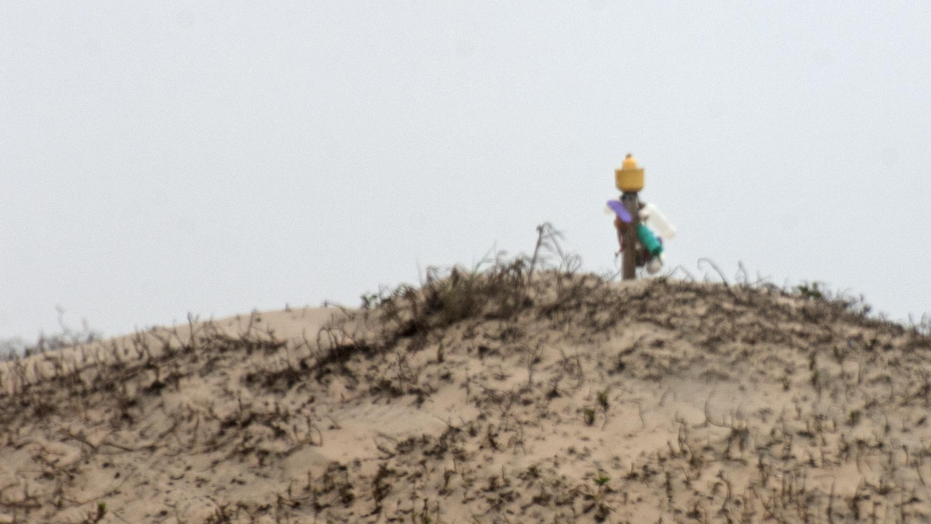 SPI beach sculpture in the dunes tele